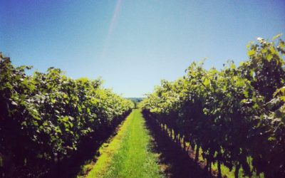 Get Fresh In The Valley: food & wine pairing passport program