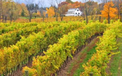 5 Reasons to tour Niagara Wine Country this Fall