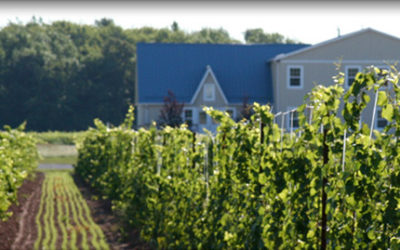 Uncork Niagara Winecast #6: Coyotes Run Estate Winery